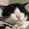 野良猫観察記⑥ ハチワレちゃん改め八雲くん保護から2週間