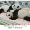 天王山の受験生と東京オリンピックとパンダの赤ちゃんの名前募集