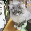 猫の道具 ~ねずみ探し~
