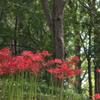 彼岸花を探した我々の行く先には ~柏の葉公園 9月~