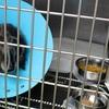 【動物病院】 ペットの寿命を左右する良い医者とやぶ医者の見分け方