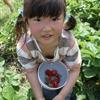 神戸市近郊の学生さん募集!! 9月25日(日)「親子農業体験」