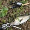 他魚種にハマる