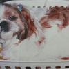 【写真複製・写真修復の専門店】犬ちゃんの古ぼけた写真の修正
