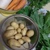 野菜をたくさん食べるために~甘酢漬けと手作りドレッシングはどうでしょう~