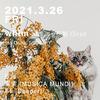 2021.3.26(FRI)  whim @ しぶや 花魁 Oiran