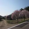 2011.05.19 【再】道東・標茶~音別、さくら旅①