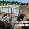 初めてのworkaway!デンマークの離れ小島ボーンホルムで、ヤギのお世話をしてみた。