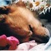 日曜日の夕方、ひき捨てられた犬(後日談)