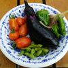 【初心者向け】家庭菜園を楽しみながら長く続ける4つのコツ