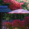 白鳥庭園の緑から黄、赤の紅葉のグラデーション