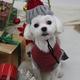 愛犬撮影会!クリスマス&お正月!久しぶりに撮影会に参加してきました!