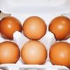 半熟卵の負荷試験 ~『うちのたまご』内野宿養鶏場~
