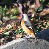 小鳥の森でKIPONアダプタ試し撮り