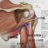肩関節の意外な痛みの正体は、、、神経!!
