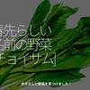 1255食目「春先らしい名前の野菜[ちょいさむ]」めずらしい野菜を見つけました!