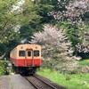 【鉄道】小湊鉄道・飯給駅でサクラと菜の花と電車を撮る。