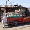 ラクダ市場は、まるでドナドナの世界