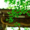 2015GW京都旅まとめ