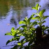 Part 1 大潟水と森公園に行ってきました