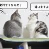 猫雑記 ~二匹の内緒話~