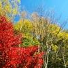 八ヶ岳の秋と、晩ごはん