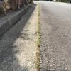 歩道際の草引き作業のお手伝い-西宮市北六甲台