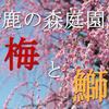 しだれ梅の名所!鈴鹿の森庭園で梅を撮り、ブリを食べる