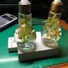 ハーバリウム用イルミネーションの製作