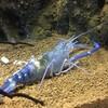岐阜県各務原市の世界淡水魚園水族館「アクア・トトぎふ」に行ってきました Part-4 「お魚以外編」