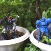 【家庭菜園初心者】シソとバジルは適当に水をやっておけば勝手に育つ