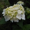 「無常」のお話⑪~風に散る花、はかなさを自覚して~「法の水茎」82