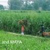 【マヤ暦セッション】機嫌よく生きるためにマヤの暦を活用する!キャンペーンのご案内
