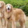 保護犬はるか、初めてのお友だち。