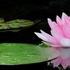 【仏教用語】 日常生活で用いられる身近な仏教用語一覧
