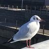 業平朝臣が隅田川で都鳥を見た季節はいつなのか?を考えてみました‼