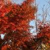 長瀞の宝登山で紅葉を堪能!お風呂は西武秩父の「祭りの湯」