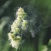 【アレルギー】食べ物のアレルギーと花粉症との因果関係