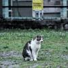 夕暮れ公園の猫さま「自分の写真展6日目」