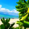 家族旅行で人気のパナリ島シュノーケル〜西表島で時間を贅沢に使おう〜🌴