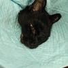1年前の7月、愛猫に扁平上皮癌が見つかった⑨
