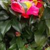 ブラッディ・マリーと花々