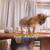 【猫画像】キジトラ猫との出会いを書いていこうと思う