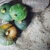 お墓まいりとかぼちゃの収穫