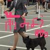 甲斐犬サンの「勝ち抜け!ドッグショー」其の弐〜京都府クラブ連合展٩(^‿^)۶楽シンダモノ勝チィ❗️