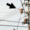 電線に女が、救助拒否だって・・・