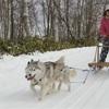 犬ぞり的な犬の散歩用チャリ。アイディア。