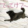 甲斐犬サンの壁画シリーズの巻〜アルタミラ洞窟カバンクシーカ⁈_φ(・_・メモメモ……。