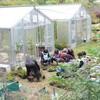 ブルーベリー挿し木苗の鉢上げ 班研修、始まる前