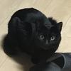 黒猫って…